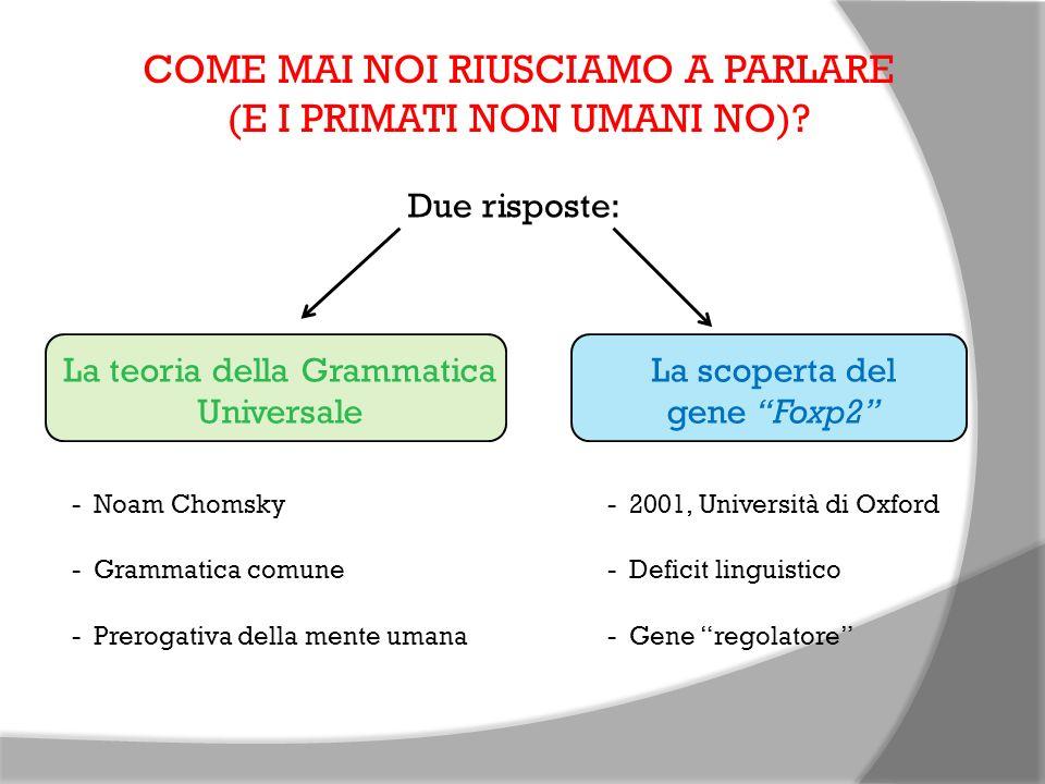 COME MAI NOI RIUSCIAMO A PARLARE (E I PRIMATI NON UMANI NO)? Due risposte: La teoria della Grammatica Universale - Noam Chomsky - Grammatica comune -