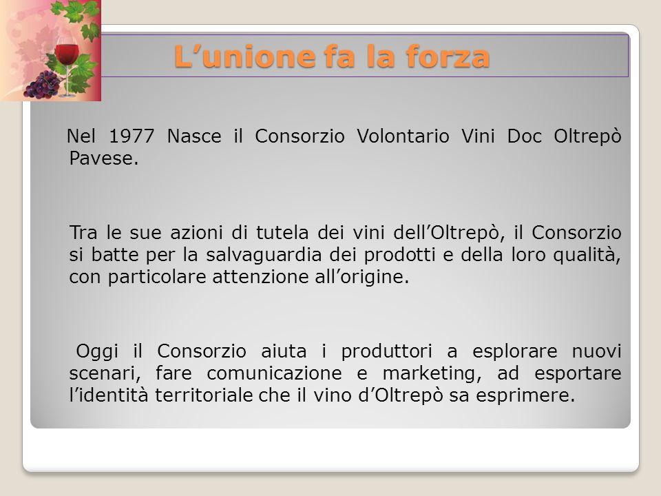 Lunione fa la forza Nel 1977 Nasce il Consorzio Volontario Vini Doc Oltrepò Pavese. Tra le sue azioni di tutela dei vini dellOltrepò, il Consorzio si