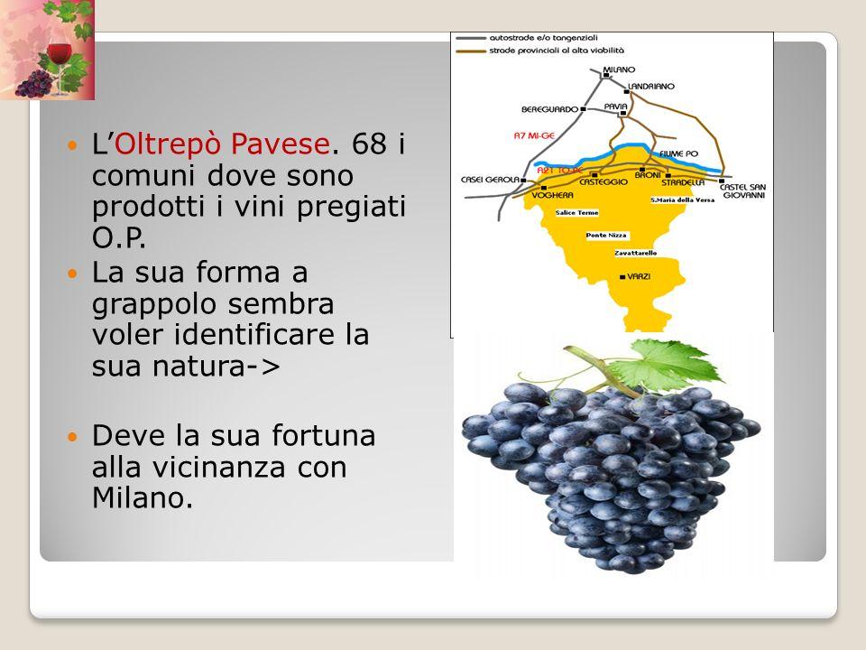 LOltrepò Pavese. 68 i comuni dove sono prodotti i vini pregiati O.P. La sua forma a grappolo sembra voler identificare la sua natura-> Deve la sua for