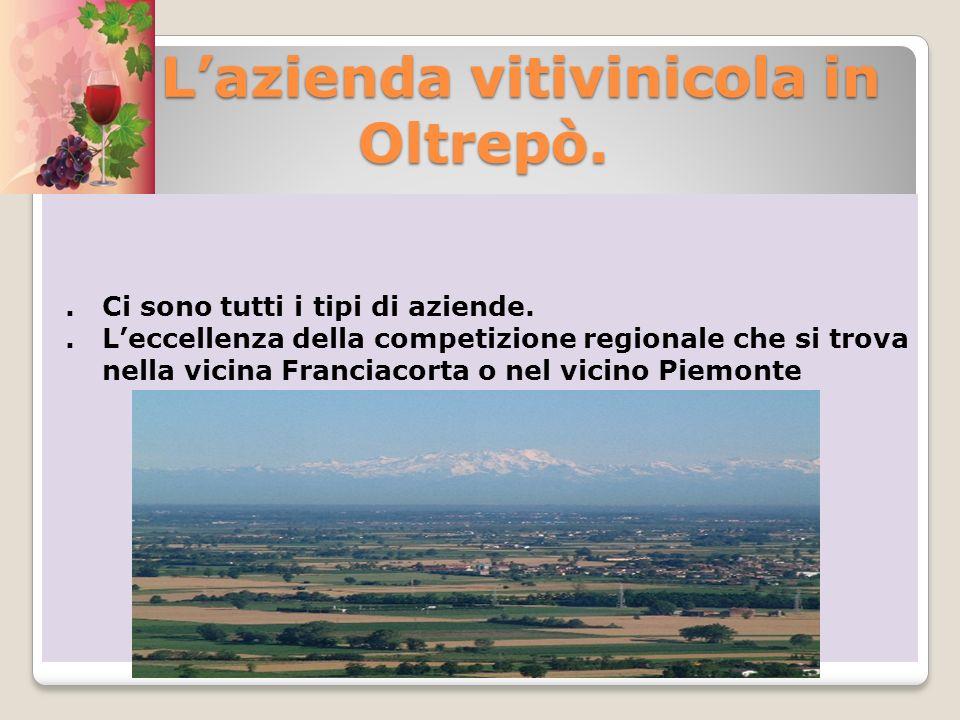 Lazienda vitivinicola in Oltrepò. Lazienda vitivinicola in Oltrepò.. Ci sono tutti i tipi di aziende.. Leccellenza della competizione regionale che si