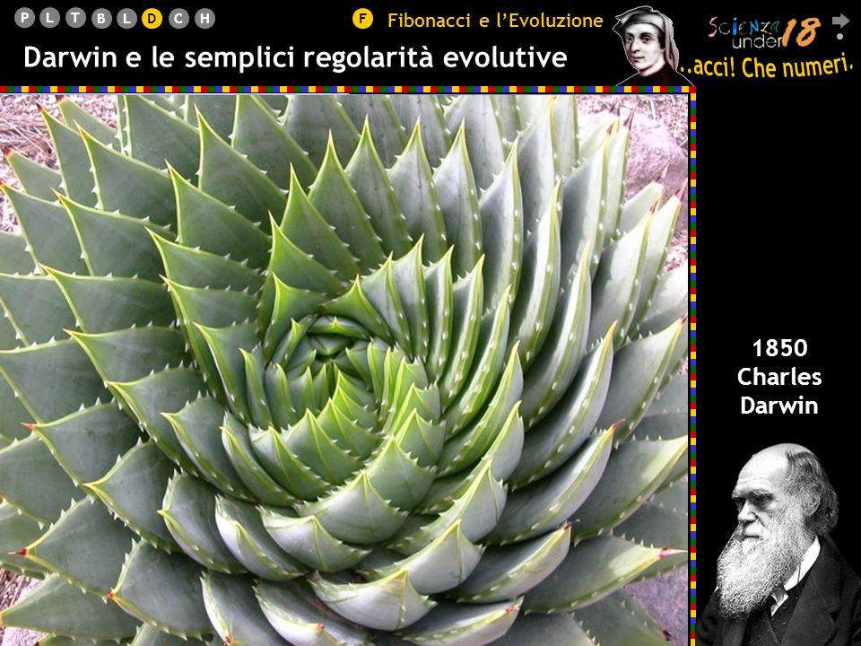 PLT BLDCHF Darwin e le semplici regolarità evolutive 1850 Charles Darwin Fibonacci e lEvoluzione D