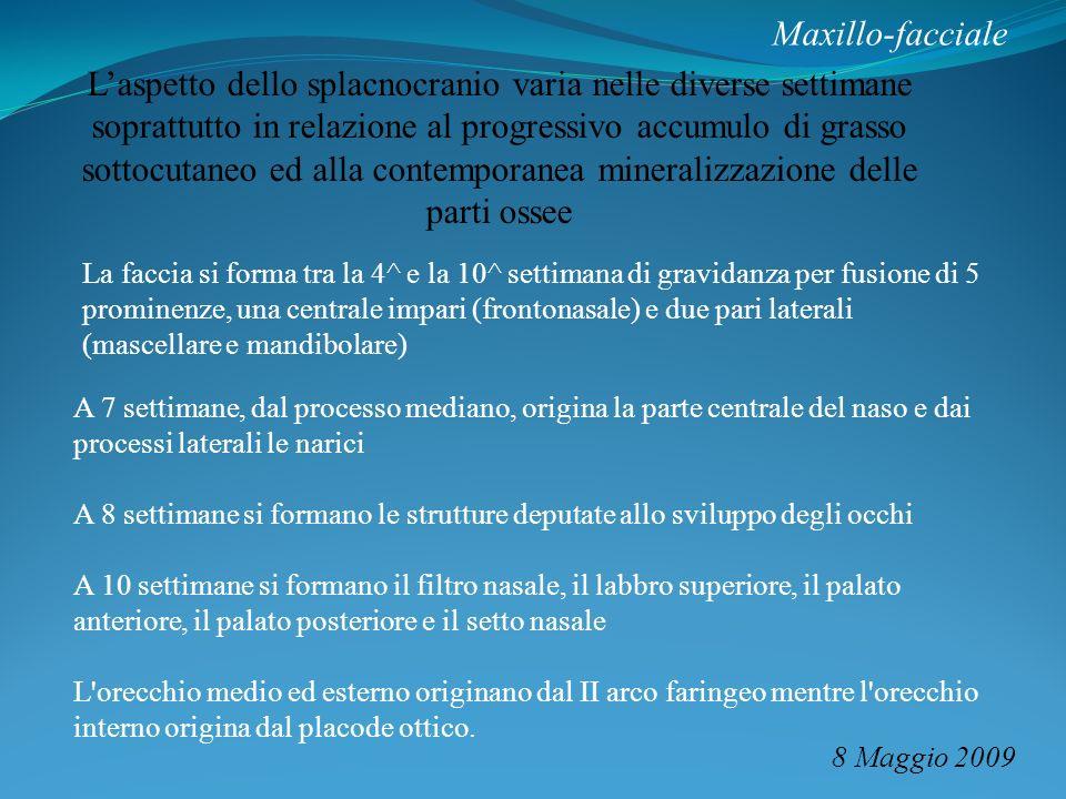 Maxillo-facciale 8 Maggio 2009 Laspetto dello splacnocranio varia nelle diverse settimane soprattutto in relazione al progressivo accumulo di grasso s