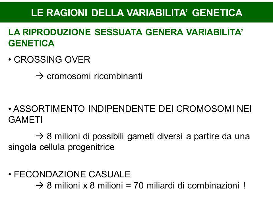 LE RAGIONI DELLA VARIABILITA GENETICA LA RIPRODUZIONE SESSUATA GENERA VARIABILITA GENETICA CROSSING OVER cromosomi ricombinanti ASSORTIMENTO INDIPENDE