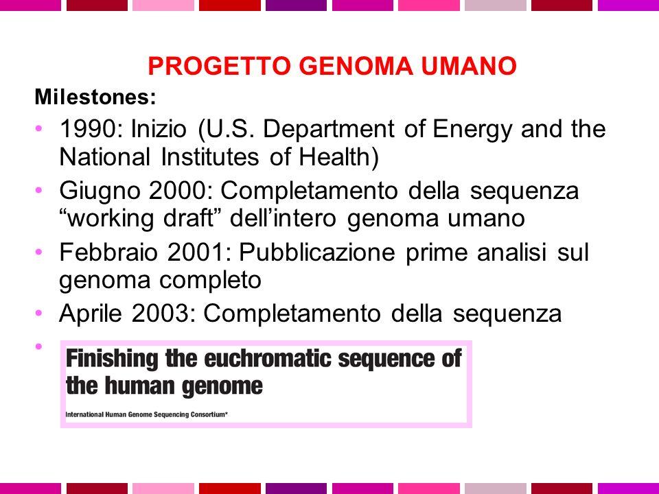 PROGETTO GENOMA UMANO Milestones: 1990: Inizio (U.S. Department of Energy and the National Institutes of Health) Giugno 2000: Completamento della sequ