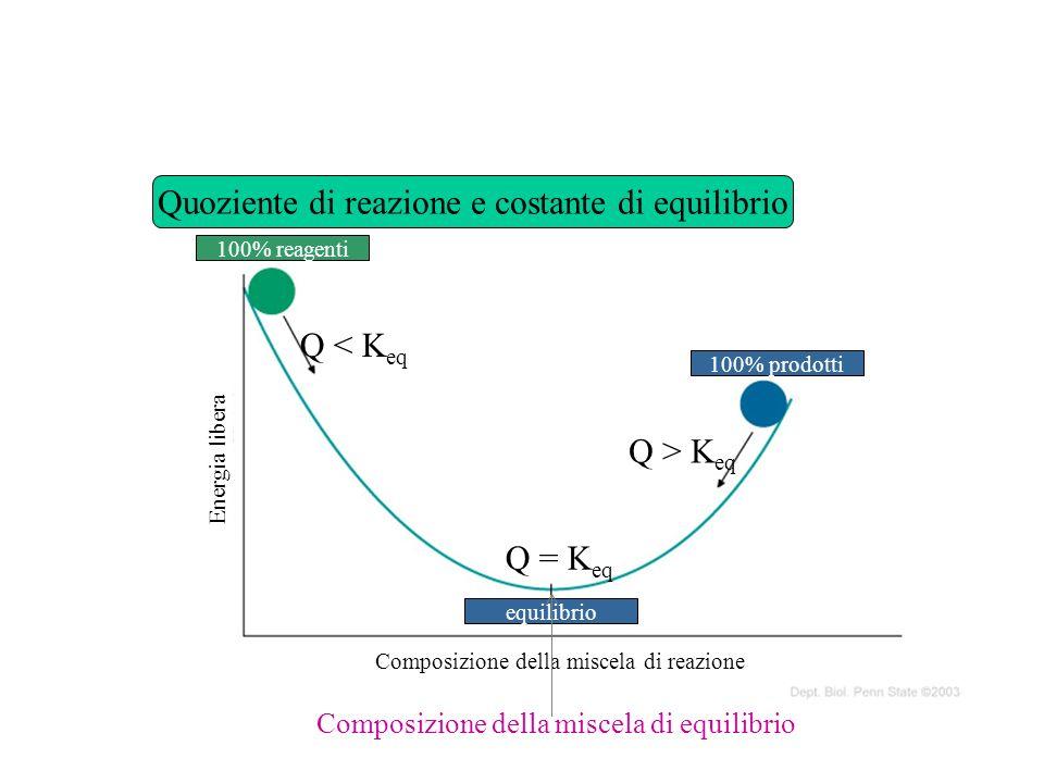 Quoziente di reazione e costante di equilibrio 100% reagenti 100% prodotti equilibrio Composizione della miscela di reazione Energia libera Q < K eq Q