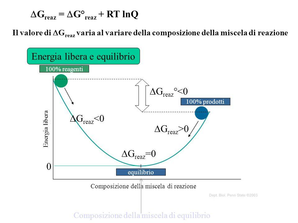 Energia libera e equilibrio 100% reagenti 100% prodotti equilibrio Composizione della miscela di reazione Energia libera G reaz °<0 0 Composizione del