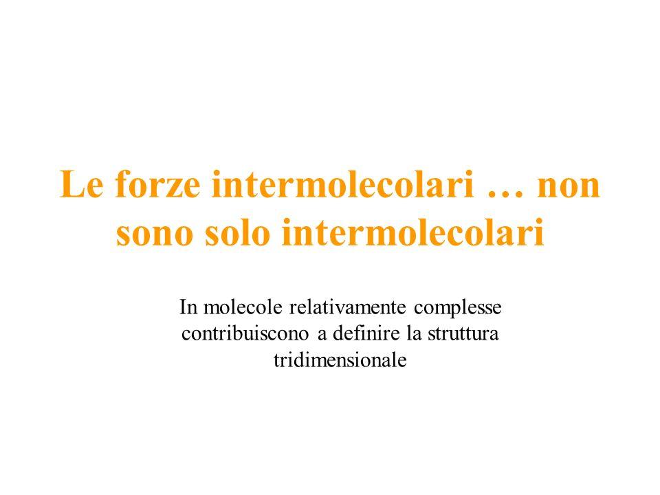 Le forze intermolecolari … non sono solo intermolecolari In molecole relativamente complesse contribuiscono a definire la struttura tridimensionale