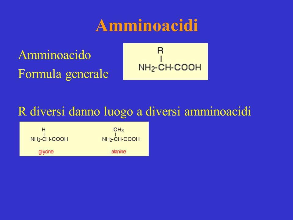 Amminoacidi Amminoacido Formula generale R diversi danno luogo a diversi amminoacidi