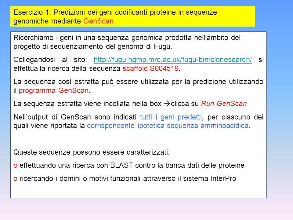 Esercizio 1: Predizioni dei geni codificanti proteine in sequenze genomiche mediante GenScan Ricerchiamo i geni in una sequenza genomica prodotta nell