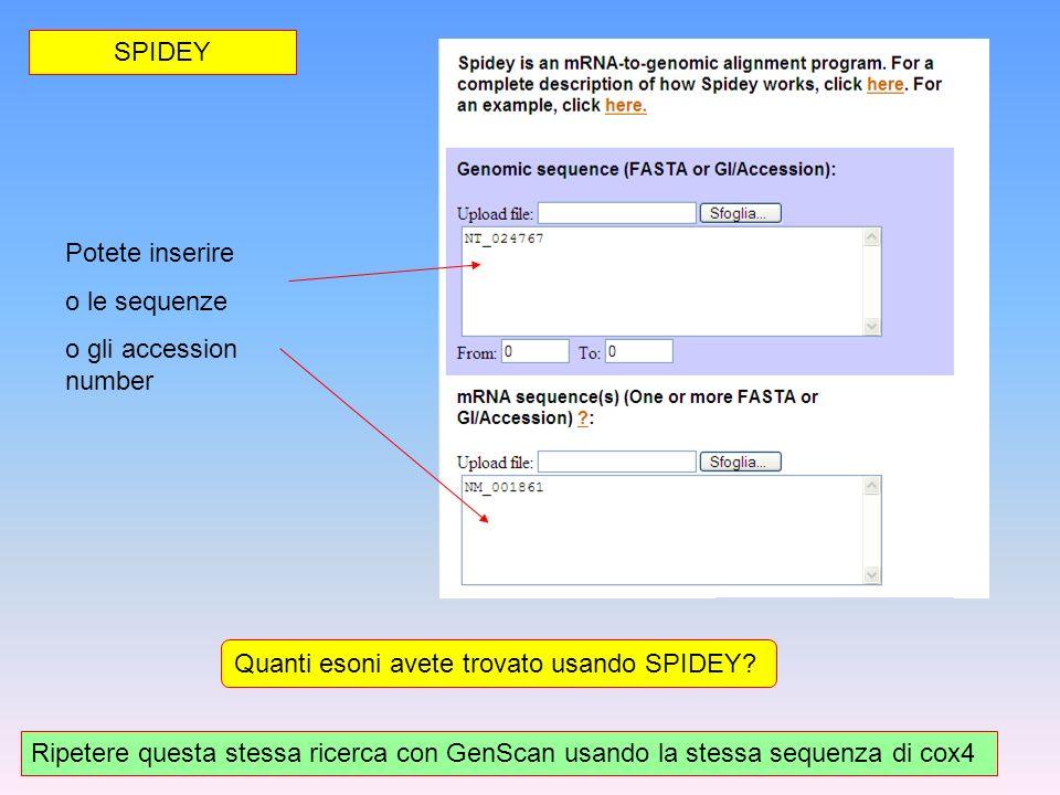 Ripetere questa stessa ricerca con GenScan usando la stessa sequenza di cox4 Quanti esoni avete trovato usando SPIDEY? SPIDEY Potete inserire o le seq