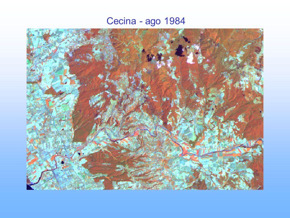 Cecina - ago 1984