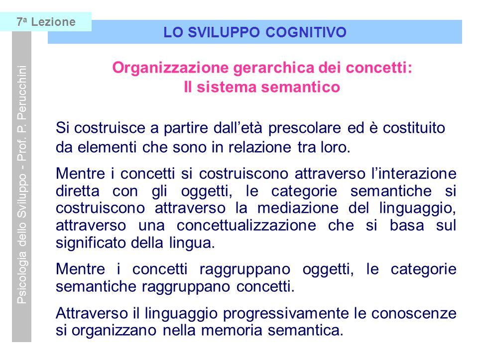 LO SVILUPPO COGNITIVO Psicologia dello Sviluppo - Prof. P. Perucchini 7 a Lezione Organizzazione gerarchica dei concetti: Il sistema semantico Si cost