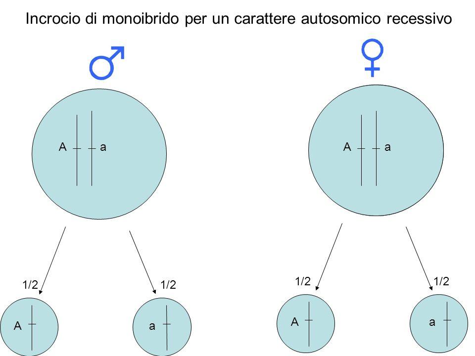 AaAa A A a a 1/2 Incrocio di monoibrido per un carattere autosomico recessivo