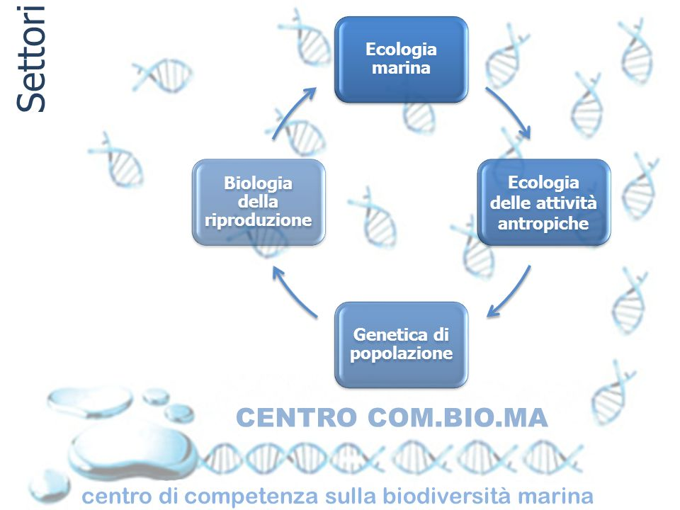 centro di competenza sulla biodiversità marina CENTRO COM.BIO.MA Settori Ecologia marina Ecologia delle attività antropiche Genetica di popolazione Bi