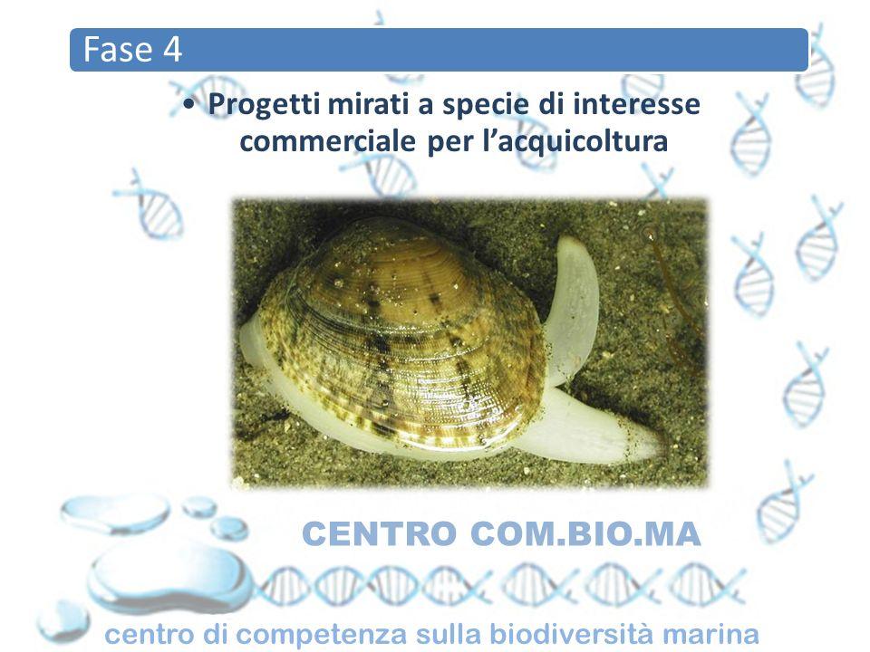 centro di competenza sulla biodiversità marina CENTRO COM.BIO.MA Fase 4 Progetti mirati a specie di interesse commerciale per lacquicoltura