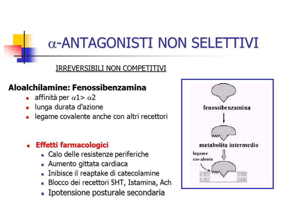 -ANTAGONISTI NON SELETTIVI -ANTAGONISTI NON SELETTIVI IRREVERSIBILI NON COMPETITIVI Aloalchilamine: Fenossibenzamina affinità per 1> 2 affinità per 1>