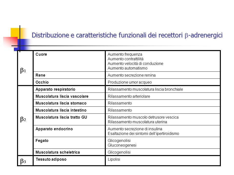Distribuzione e caratteristiche funzionali dei recettori -adrenergici CuoreAumento frequenza Aumento contrattilità Aumento velocità di conduzione Aume