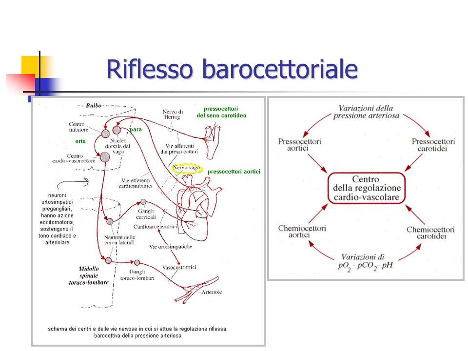 -ANTAGONISTI NON SELETTIVI -ANTAGONISTI NON SELETTIVI PINDOLOLO PINDOLOLOFARMACOCINETICA Somministrazione: per os, parenterale Assorbimento: completo Metabolismo: discreto metabolismo di primo passaggio Biodisponibilità orale: 75% Distribuzione: ubiquitaria (attraversa efficacemente la BEE) Emivita plasmatica: 3-4 h Escrezione: urinaria USI TERAPEUTICI Ipertensione arteriosa (pref.