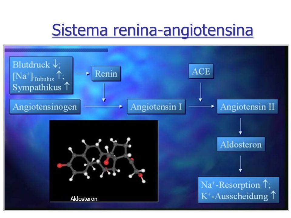 Sistema renina-angiotensina Aldosteron
