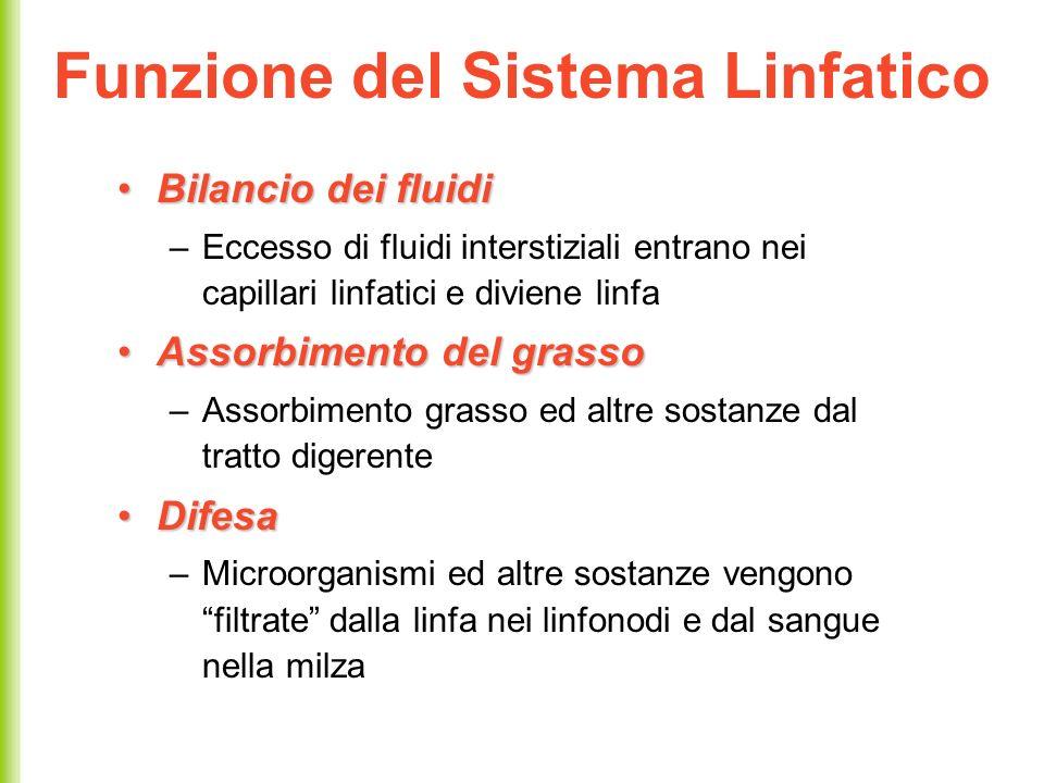 Funzione del Sistema Linfatico Bilancio dei fluidiBilancio dei fluidi –Eccesso di fluidi interstiziali entrano nei capillari linfatici e diviene linfa