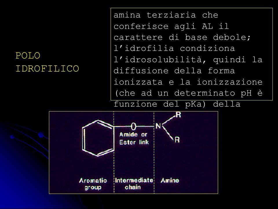 POLO IDROFILICO amina terziaria che conferisce agli AL il carattere di base debole; lidrofilia condiziona lidrosolubilità, quindi la diffusione della