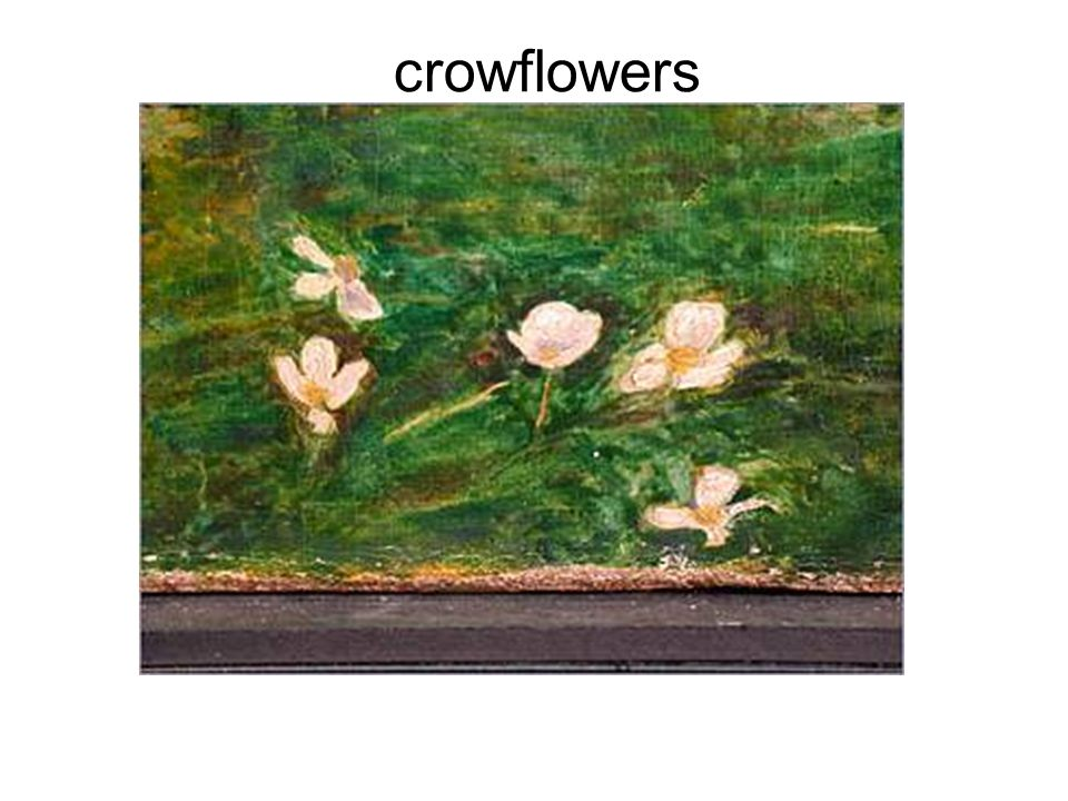 crowflowers