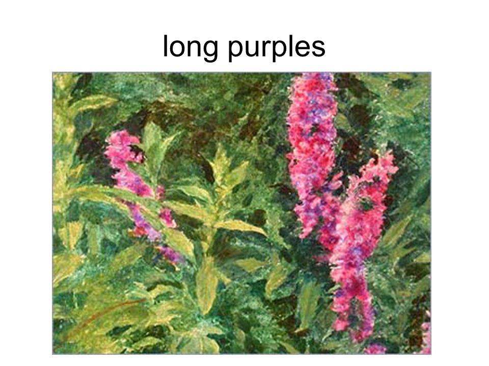 long purples