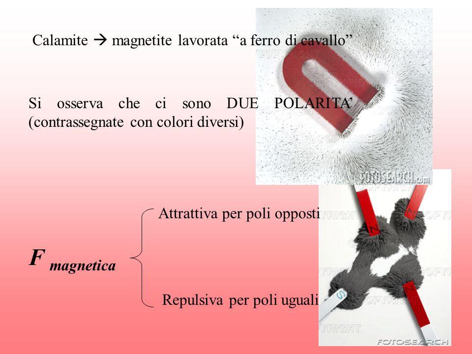 Calamite magnetite lavorata a ferro di cavallo Si osserva che ci sono DUE POLARITA (contrassegnate con colori diversi) F magnetica Attrattiva per poli