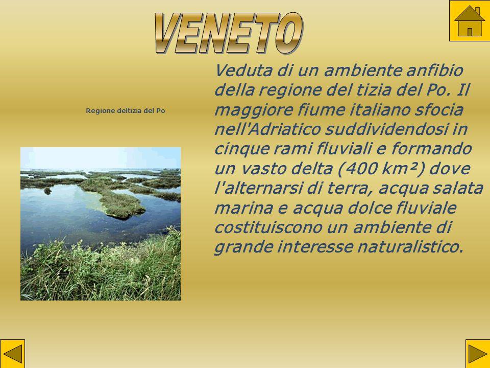 Regione deltizia del Po Veduta di un ambiente anfibio della regione del tizia del Po.