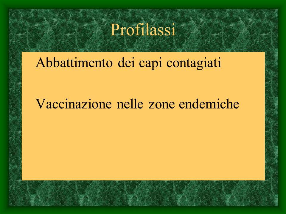 Profilassi Abbattimento dei capi contagiati Vaccinazione nelle zone endemiche