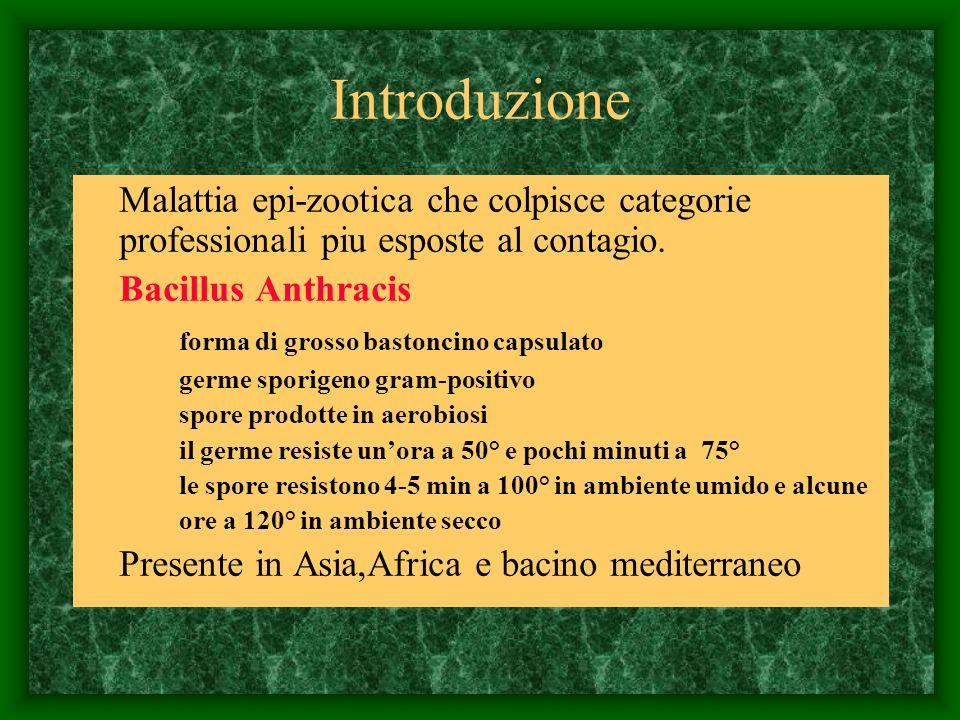 Introduzione Malattia epi-zootica che colpisce categorie professionali piu esposte al contagio. Bacillus Anthracis forma di grosso bastoncino capsulat