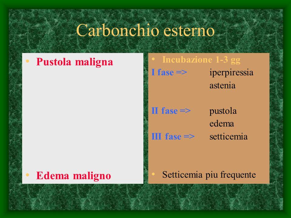 Carbonchio esterno Pustola maligna Edema maligno Incubazione 1-3 gg I fase => iperpiressia astenia II fase =>pustola edema III fase =>setticemia Setti