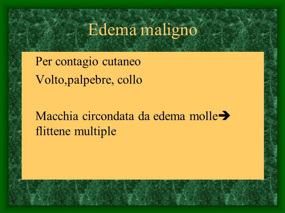 Edema maligno Per contagio cutaneo Volto,palpebre, collo Macchia circondata da edema molle flittene multiple