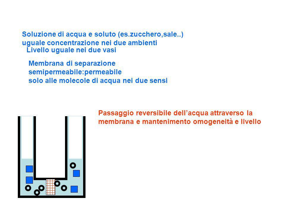 Soluzione di acqua e soluto (es.zucchero,sale..) uguale concentrazione nei due ambienti Livello uguale nei due vasi Membrana di separazione semipermea