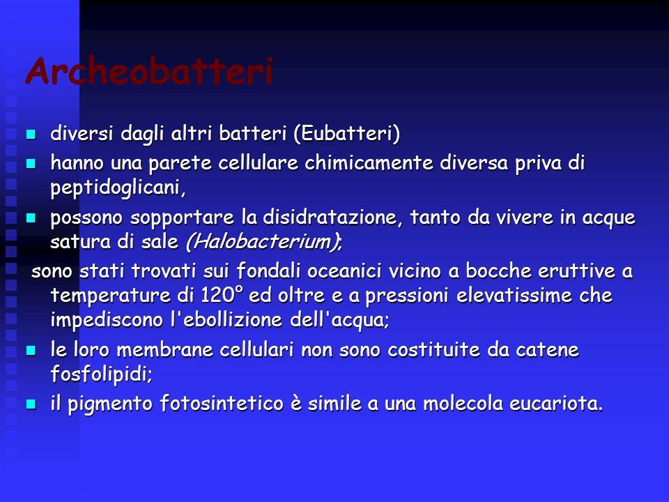 Archeobatteri diversi dagli altri batteri (Eubatteri) diversi dagli altri batteri (Eubatteri) hanno una parete cellulare chimicamente diversa priva di