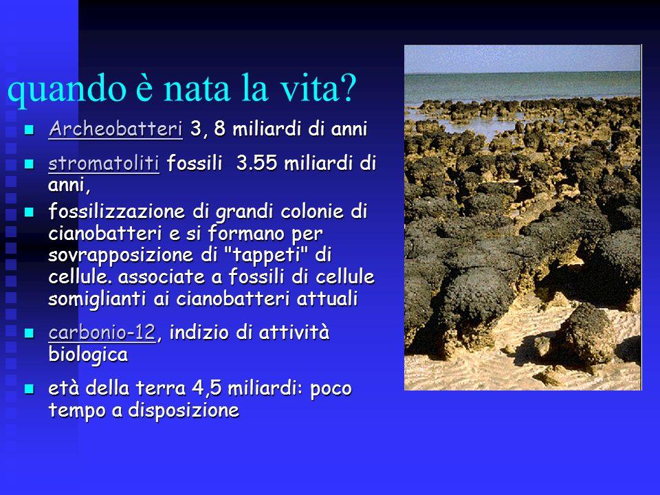 quando è nata la vita? Archeobatteri 3, 8 miliardi di anni Archeobatteri 3, 8 miliardi di anni Archeobatteri Archeobatteri stromatoliti fossili 3.55 m