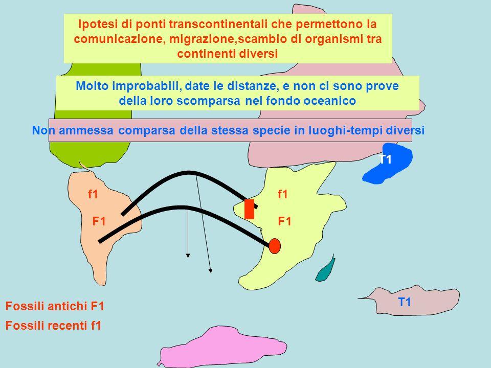 T1 F1 f1 Fossili antichi F1 Fossili recenti f1 Ipotesi di ponti transcontinentali che permettono la comunicazione, migrazione,scambio di organismi tra