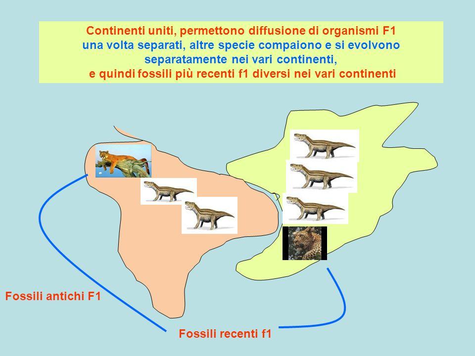 T1 Fossili antichi F1 Fossili recenti f1 Continenti uniti, permettono diffusione di organismi F1 una volta separati, altre specie compaiono e si evolv