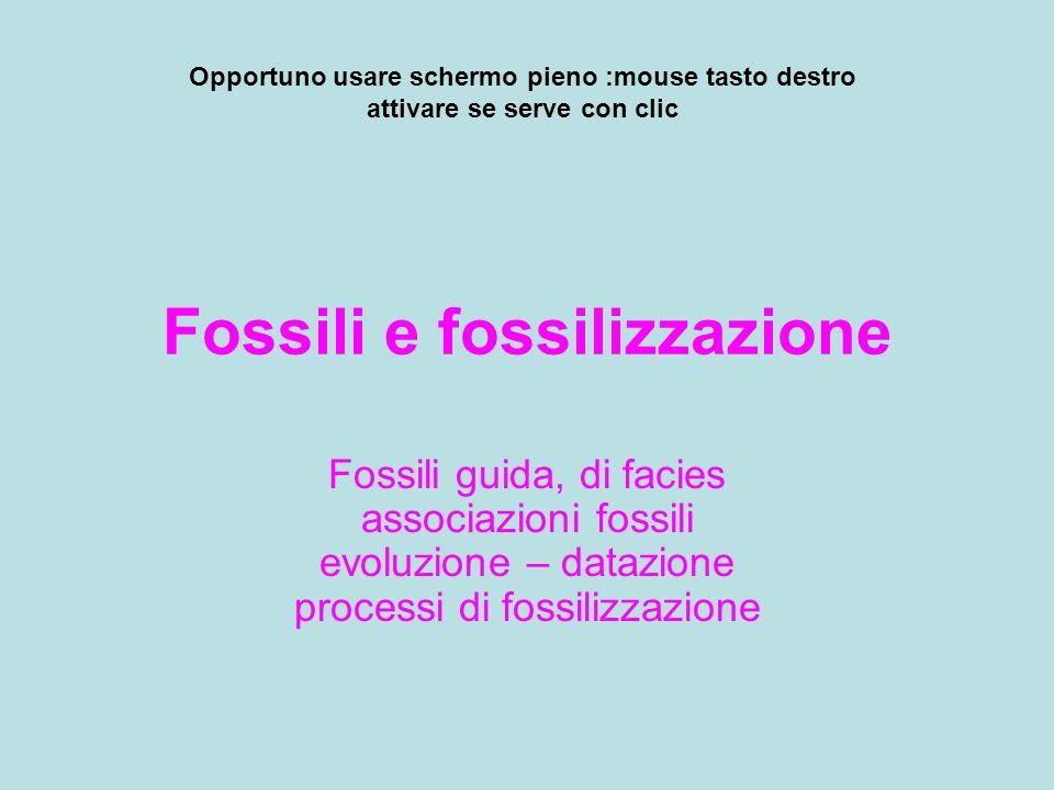 Fossili e fossilizzazione Fossili guida, di facies associazioni fossili evoluzione – datazione processi di fossilizzazione Opportuno usare schermo pie