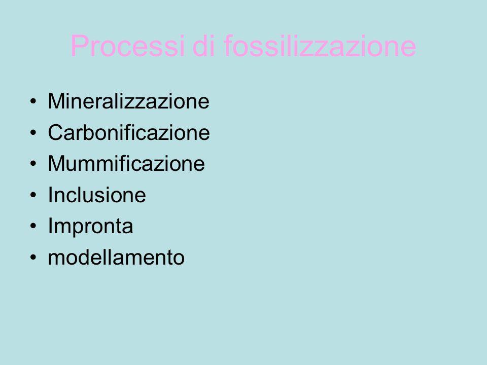 Processi di fossilizzazione Mineralizzazione Carbonificazione Mummificazione Inclusione Impronta modellamento