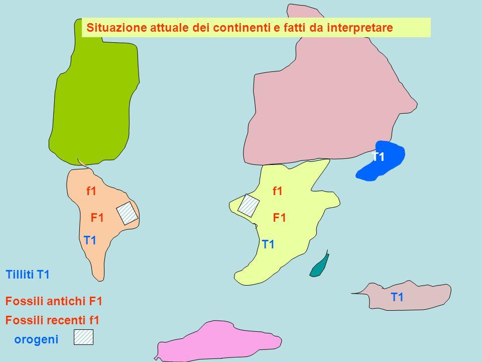 T1 f1 Fossili antichi F1 Fossili recenti f1 Continenti uniti, permettono diffusione di organismi F1 una volta separati, altre specie compaiono e si evolvono separatamente nei vari continenti, e quindi fossili più recenti f1 diversi nei vari continenti F1