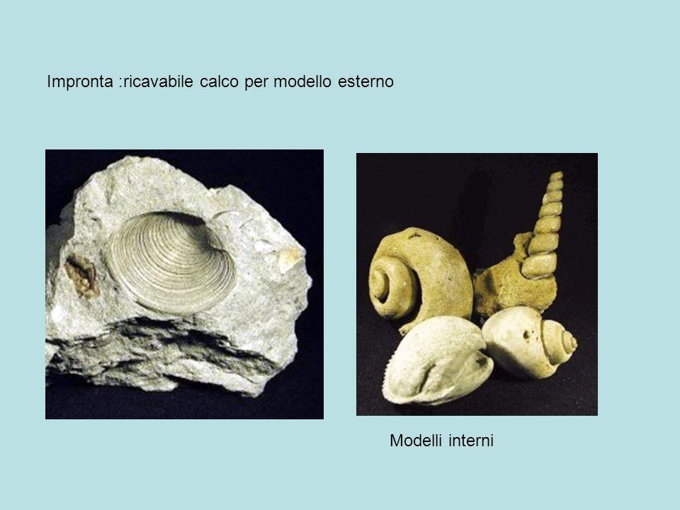 Impronta :ricavabile calco per modello esterno Modelli interni