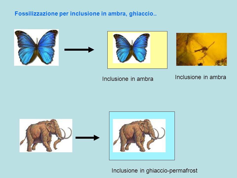 Fossilizzazione per inclusione in ambra, ghiaccio.. Inclusione in ambra Inclusione in ghiaccio-permafrost Inclusione in ambra