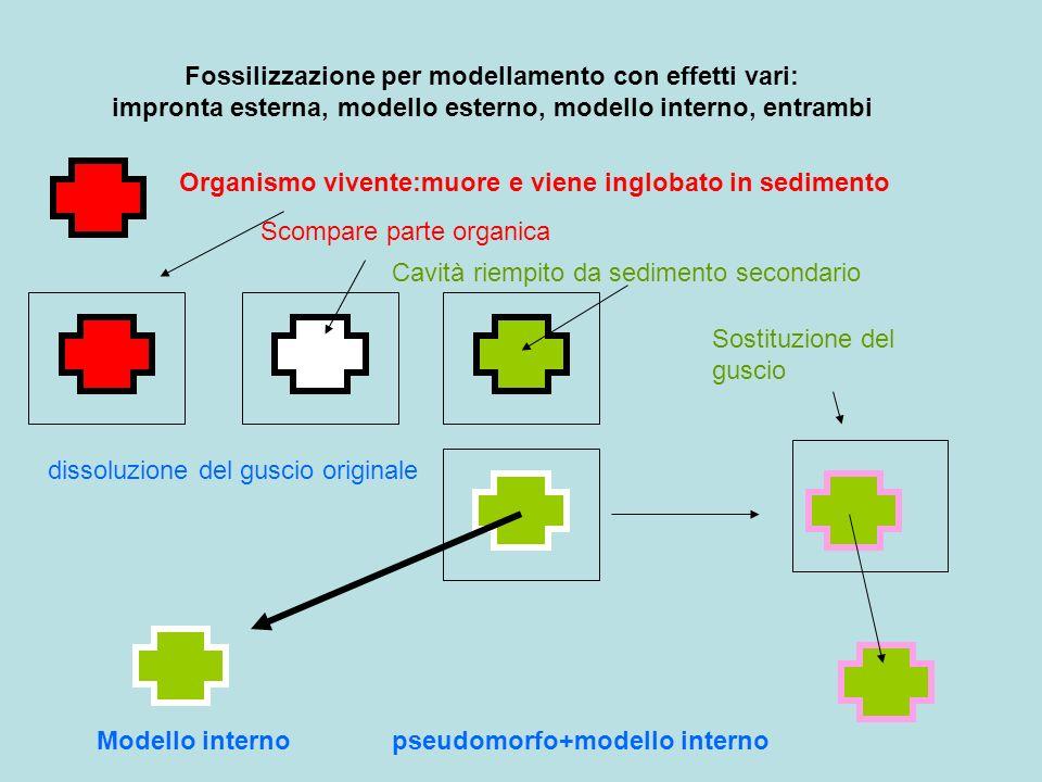 Fossilizzazione per modellamento con effetti vari: impronta esterna, modello esterno, modello interno, entrambi Organismo vivente:muore e viene inglob