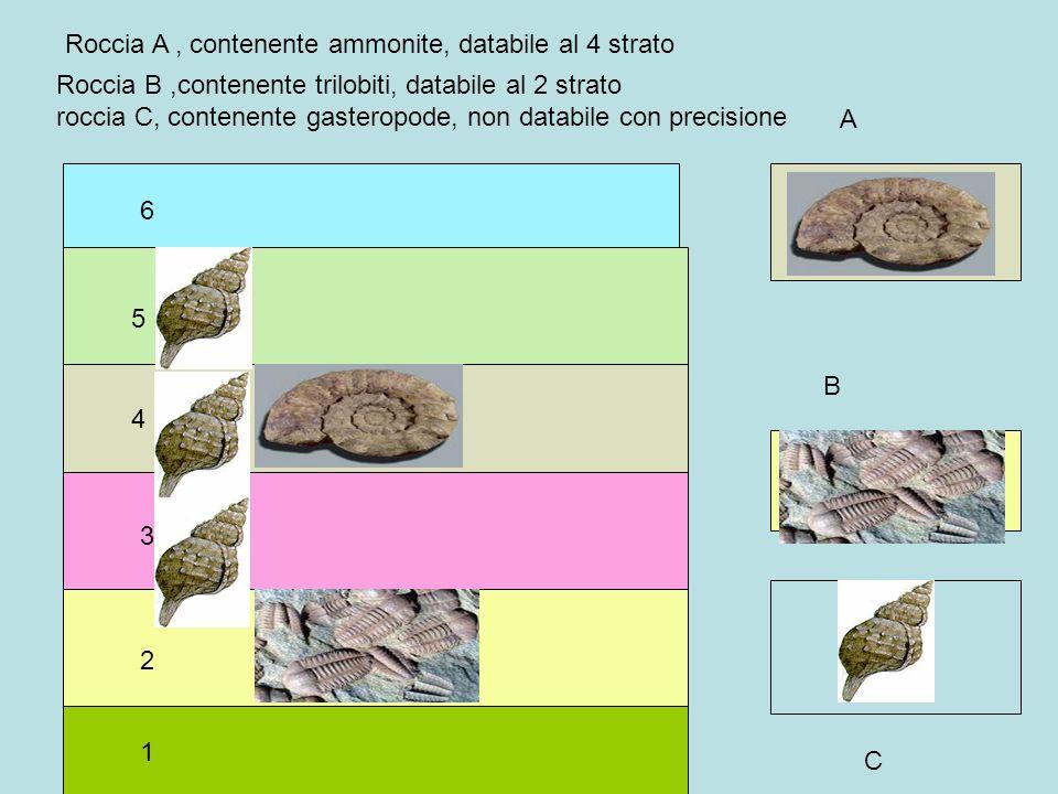 1 2 3 4 5 6 A B Roccia A, contenente ammonite, databile al 4 strato Roccia B,contenente trilobiti, databile al 2 strato roccia C, contenente gasteropo
