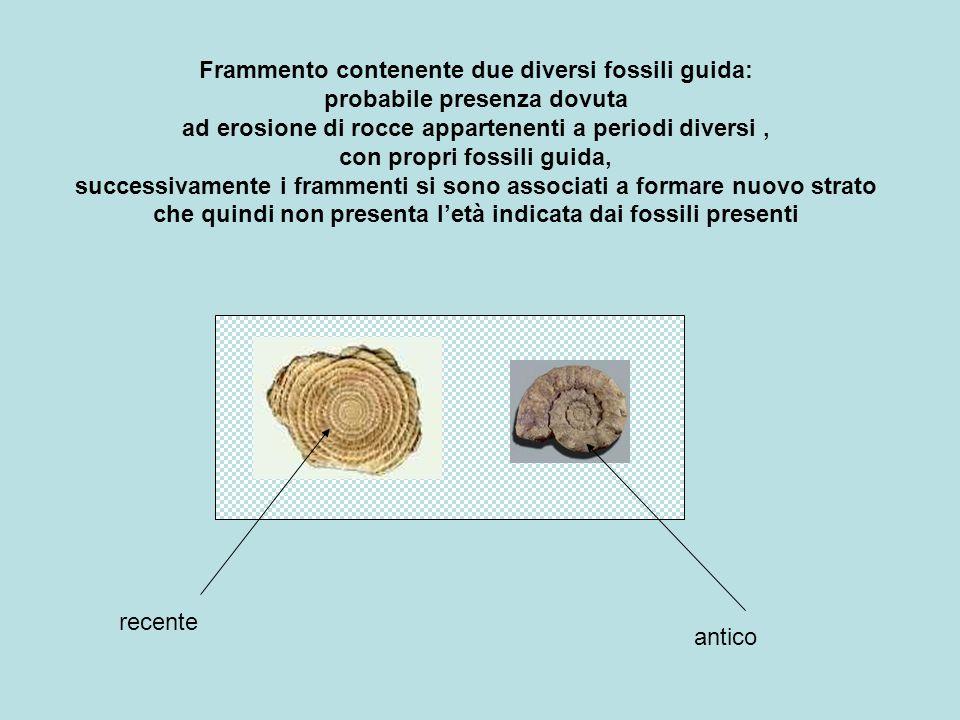 Frammento contenente due diversi fossili guida: probabile presenza dovuta ad erosione di rocce appartenenti a periodi diversi, con propri fossili guid