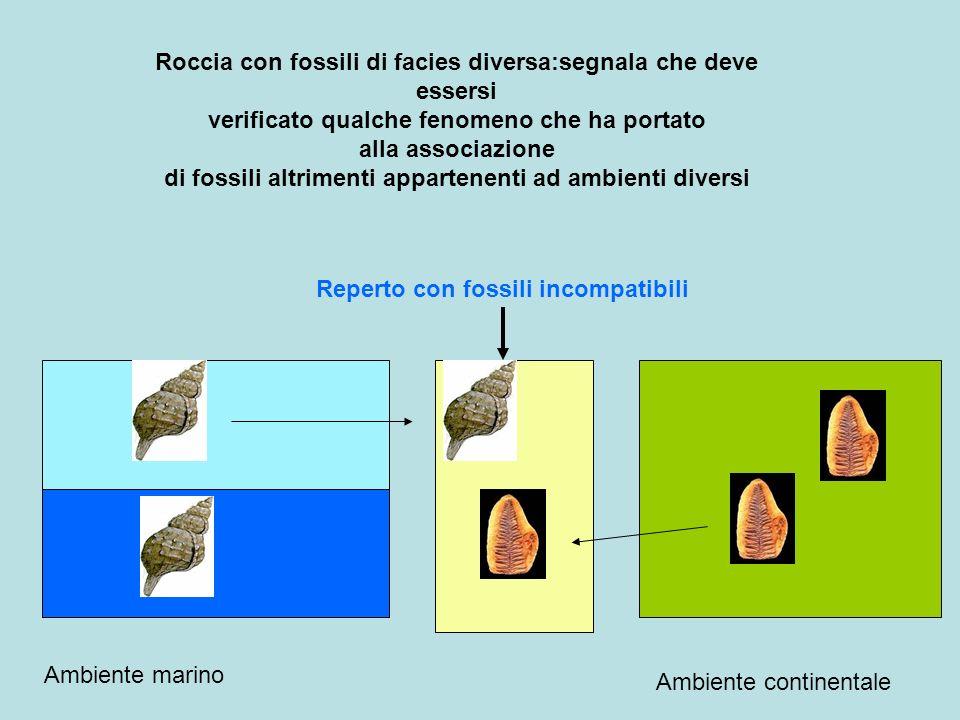 Roccia con fossili di facies diversa:segnala che deve essersi verificato qualche fenomeno che ha portato alla associazione di fossili altrimenti appar