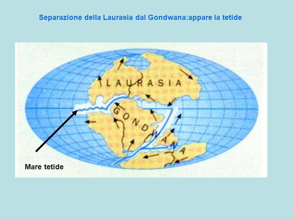 Separazione della Laurasia dal Gondwana:appare la tetide Mare tetide