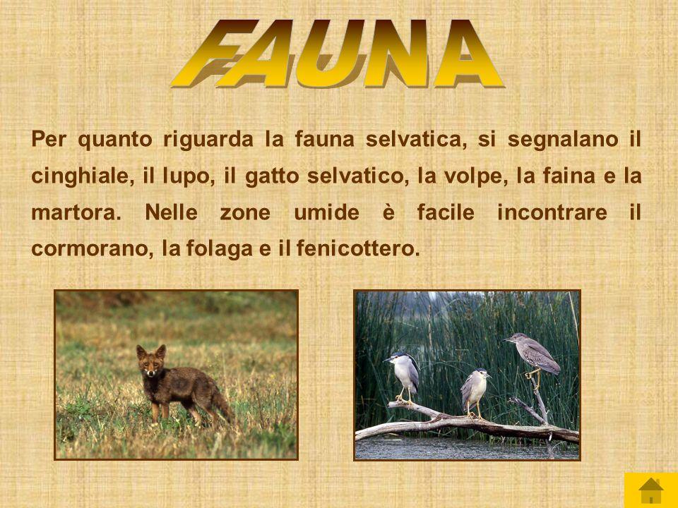 Il Lazio ha una vegetazione tipicamente Mediterranea, con piante di lentisco, mirto erica e boschi di lecci e querce.