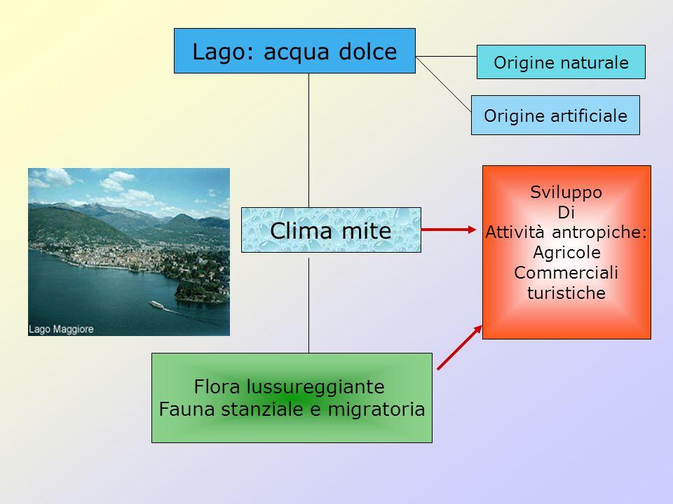 Lago: acqua dolce Clima mite Flora lussureggiante Fauna stanziale e migratoria Origine naturale Origine artificiale Sviluppo Di Attività antropiche: A